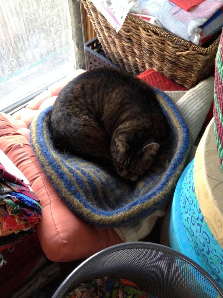 Kush in cat bed