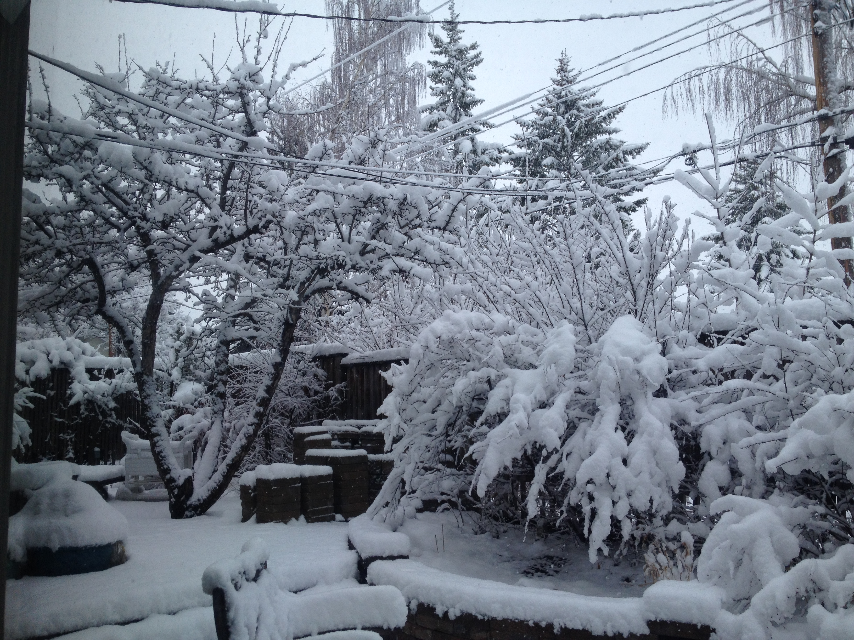 snowy spring