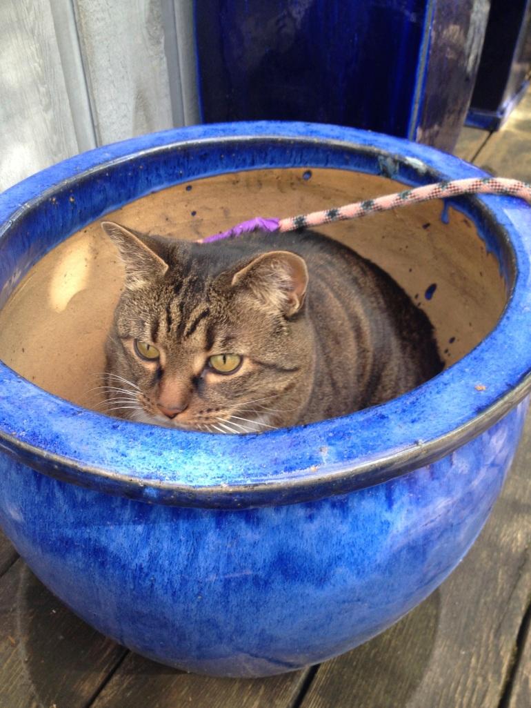 Kush in a flower pot