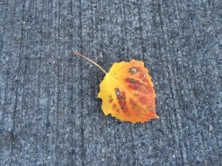 autumn leaf on the pavement
