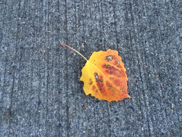 autumn leaf on the pavement