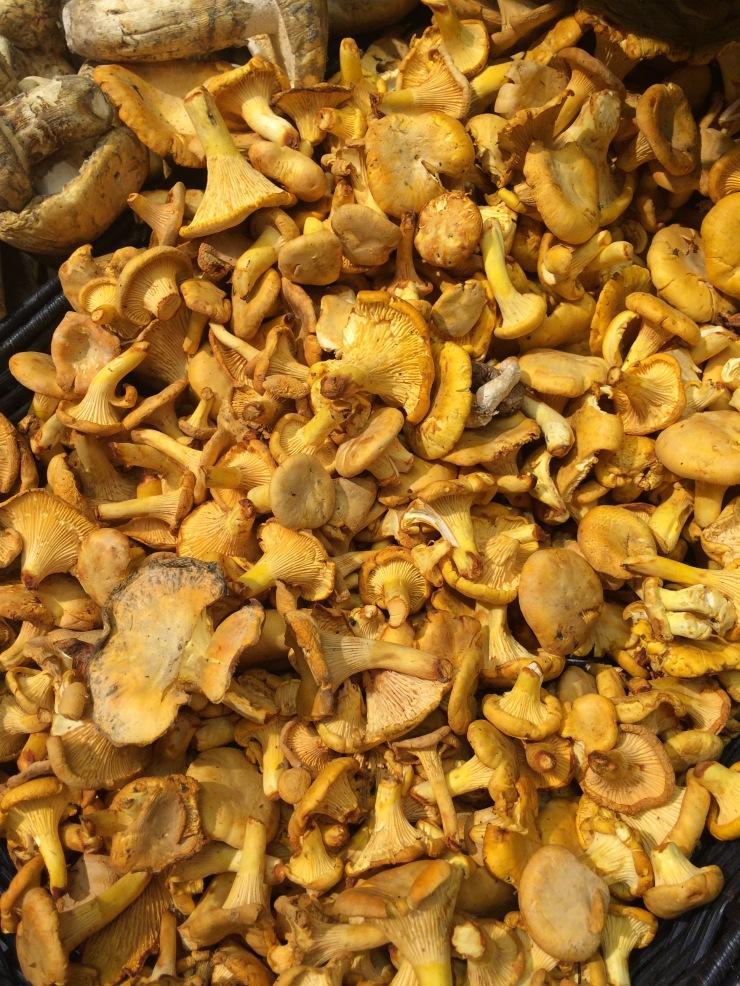 chantrelle mushrooms