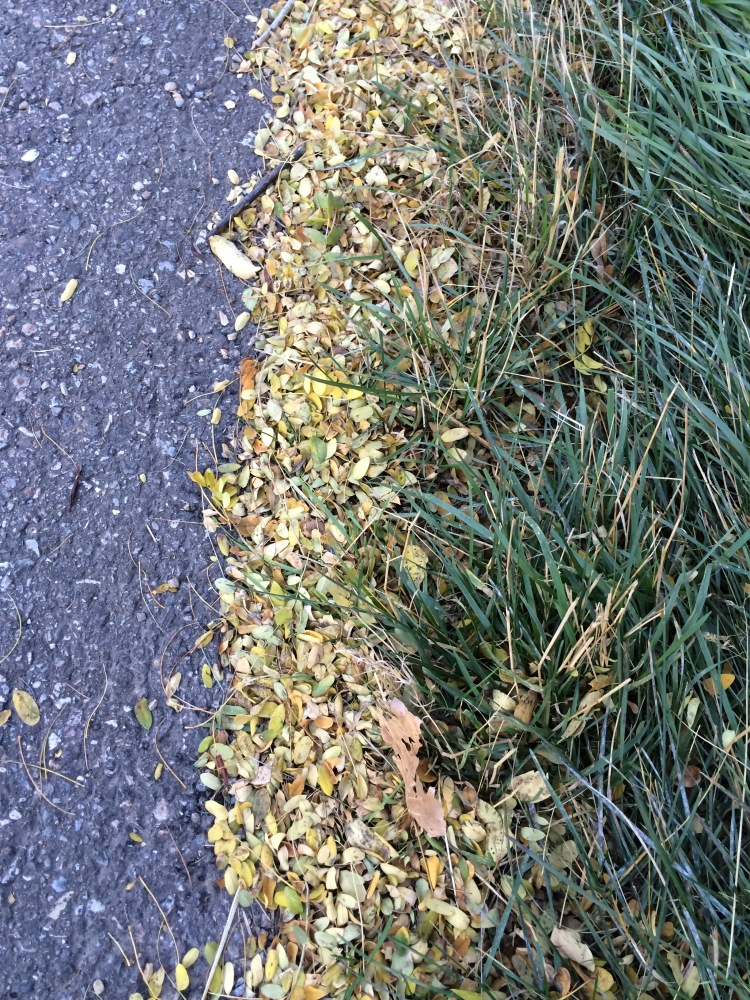 pavement, leaves and grass