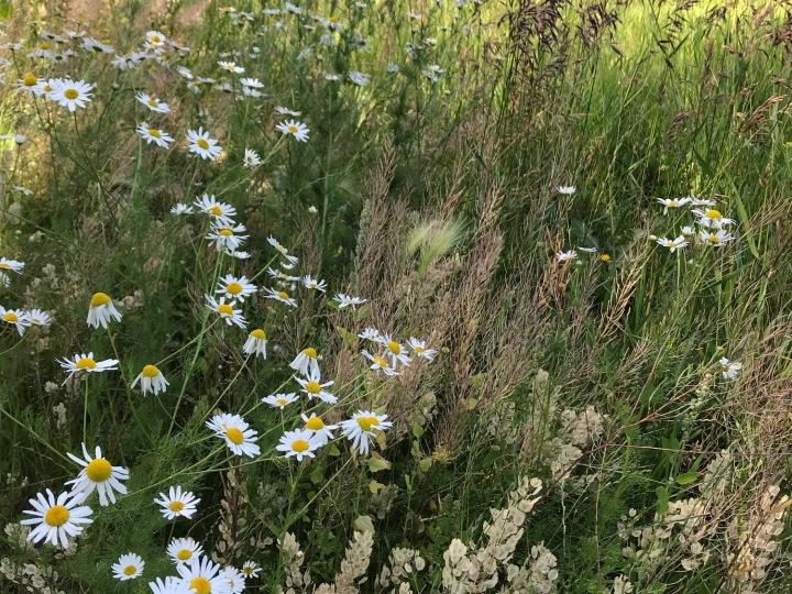 a grassy field view